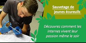 News Gmnf Interne Soigneur Ecureuil